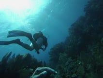潜水基拉戈 库存照片