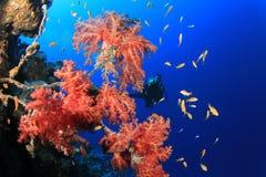潜水的红色水肺海运 库存图片