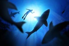 潜水者和大白鲨鱼 库存图片