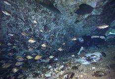 潜水者和蓝色鳃-吹管斯普林斯洞穴 库存图片