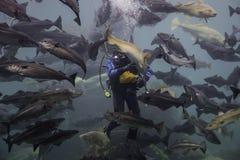 潜水者和鱼 免版税库存图片