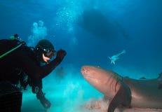 潜水者和鲨鱼 库存照片