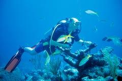 潜水者喂养鱼 图库摄影
