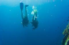 潜水者在酸值陶鲨鱼海岛的大海佩戴水肺的潜水  库存图片