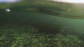 潜水者游泳在海洋,浸入在水面下 热带珊瑚礁 茴香 波浪 影视素材
