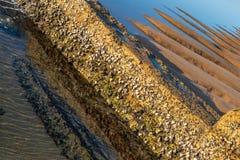 潮汐水池桑迪雕塑 免版税图库摄影