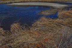 潮汐的池 免版税库存图片