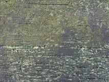 潮湿地衣绿色自然纹理 图库摄影