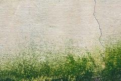 潮湿的发霉的纹理老混凝土墙 图库摄影