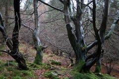 潮湿的森林 库存图片