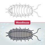 潮虫或犰狳臭虫在白色和在织地不很细灰色背景 向量例证