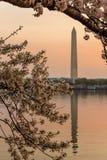 从潮水坞的华盛顿纪念碑在樱花节日期间的日出,华盛顿特区, 库存图片