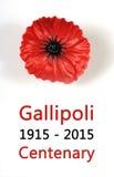 澳大利亚人Gallipoli百年, WWI,进贡4月1915年,与红色鸦片翻领别针徽章的 免版税库存照片