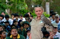 澳大利亚咆哮猫头鹰 库存图片