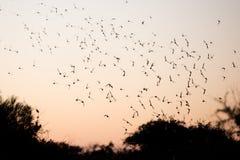 澳大利亚在日落的绿色鹦鹉 免版税库存照片