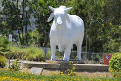 澳大利亚婆罗门公牛雕象在Rockhampton,澳大利亚 免版税库存照片