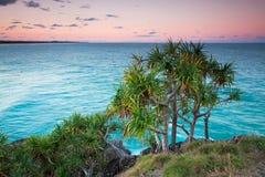 澳大利亚当地露兜树tectorius结构树 免版税库存照片