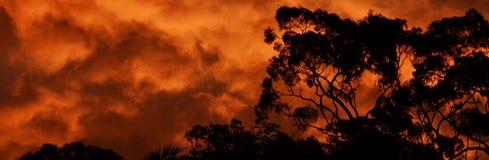 澳大利亚林区大火日落 免版税图库摄影