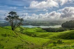 澳大利亚森林 免版税库存照片
