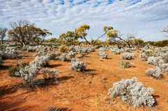 澳大利亚沙漠,澳洲内地 图库摄影