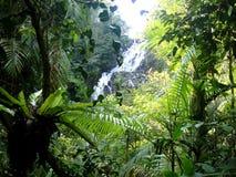 澳大利亚海岸美丽的瀑布  库存照片
