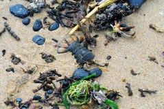 澳大利亚海滩海草、壳和岩石 免版税图库摄影