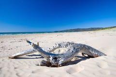 澳大利亚海滩漂流木头 免版税库存照片