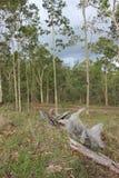 澳大利亚灌木土地 库存图片