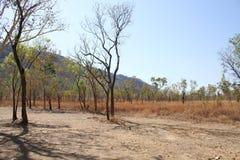 澳大利亚灌木 库存图片