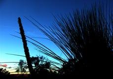 澳大利亚灌木 免版税库存照片