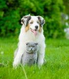 澳大利亚牧羊人小狗和猫一起坐绿色 免版税库存图片