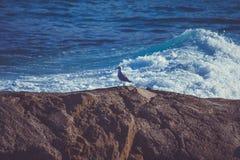 澳大利亚的悉尼邦迪滩 库存照片