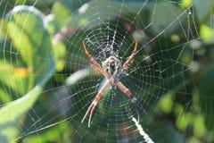 澳大利亚野生生物 库存照片