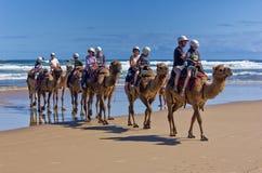 澳大利亚骆驼乘驾 免版税图库摄影
