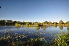 澳大利亚鳄鱼沼泽 库存图片