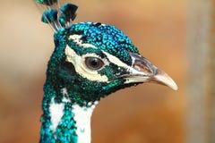 澳大利亚鸟 库存照片