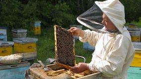 澳大利亚,加拿大,欧洲白色衣服的蜂农工作与蜂殖民地,在一间蜂房的蜂在一个森林里, a的 股票视频