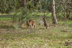 澳大利亚-维多利亚- Grampians国家公园-对南方 库存照片