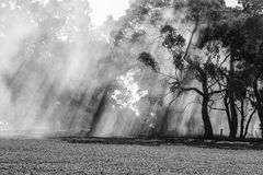 澳大利亚bushfire 免版税图库摄影