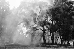澳大利亚bushfire 免版税库存照片