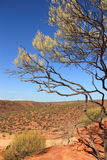 澳大利亚bushland 免版税图库摄影