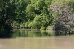澳洲密林kakadu国家公园河 库存照片