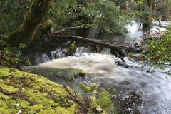 澳洲森林雨塔斯马尼亚岛瀑布 免版税库存图片