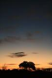 澳洲沙漠日落 库存照片
