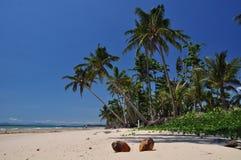 澳洲海滩任务 免版税图库摄影