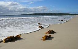 澳洲海滩collingwood 免版税库存照片