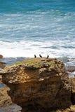 澳洲海滩torquay 免版税图库摄影