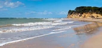 澳洲海滩torquay 免版税库存图片