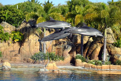 澳洲海豚执行者海运世界 免版税库存照片