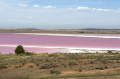 澳洲湖粉红色 免版税库存照片